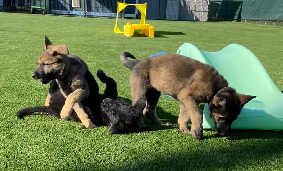 pups-3