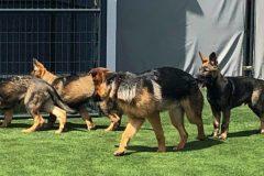 pups-8-1024x447