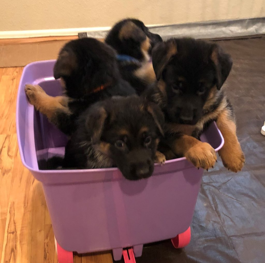 puppies30-1024x1014