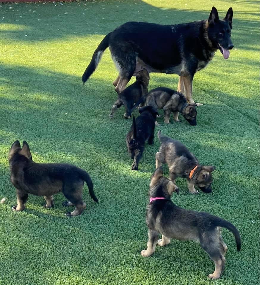 tesy-pups-1