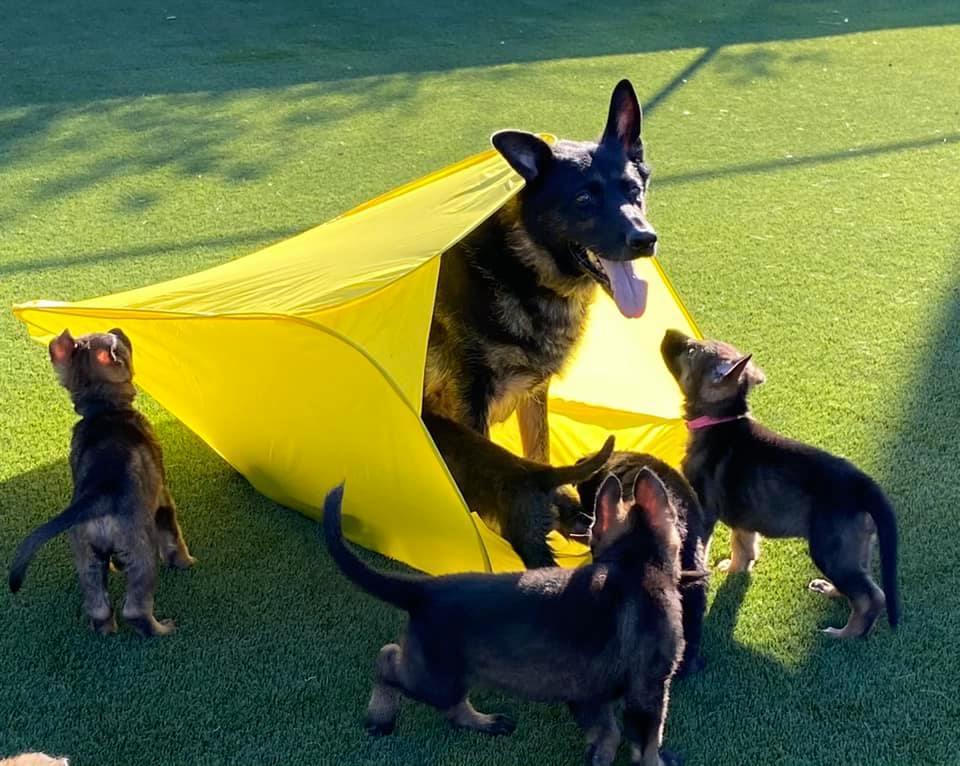 tesy-pups-3