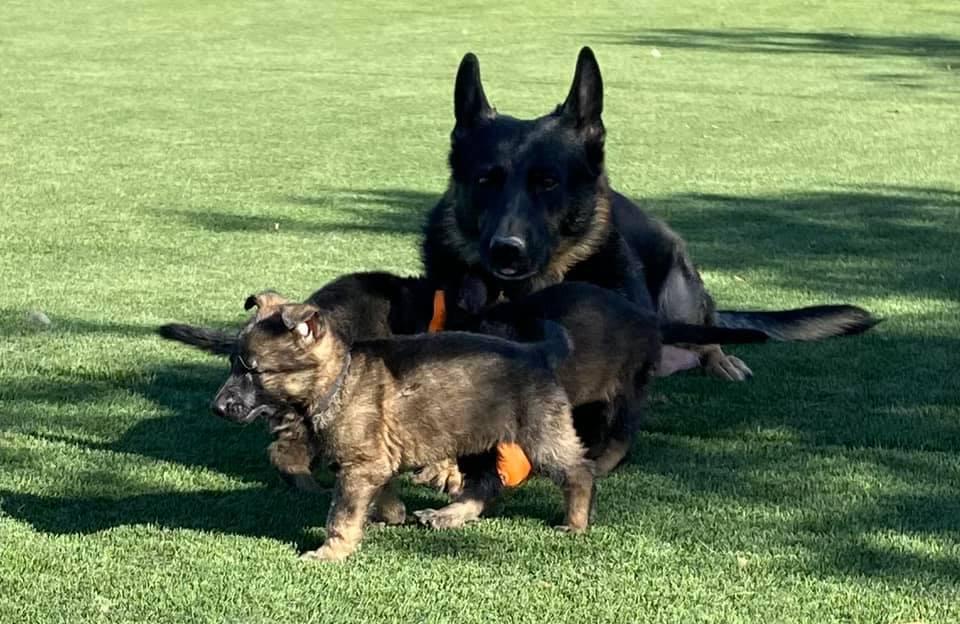 tesy-pups-4