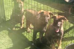 puppies28