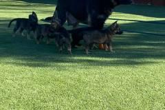 tesy-pups-2